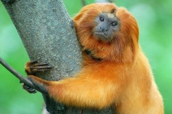 2 -rwanda-golden-monkey-trek-sight-seeing-uganda-rwanda-meineweltreisen.jpg