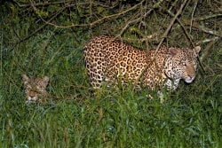 8-Leopards_Mburo_Safari_.jpg