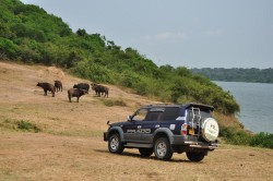 8-mburo-nationalpark.jpg