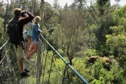 Hängebrücke Ngare Ndare Forest