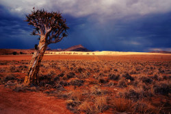 Allgem Wüste Namib