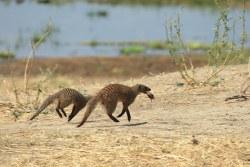Katavi Nationalpark