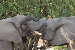 loving elephants auf Meine Welt Reisen