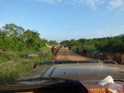 Unterwegs-in-Uganda-meineweltreisen