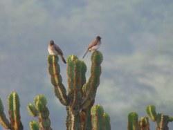 Vögel im Mburo Nationalpark
