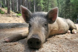 Tag 14 pig-korsika-meinewelt-reisen