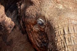 Sheldrick Elephant Orphanage MeineWelt-Reisen