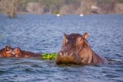 Lake Naivasha MeineWelt Reisen