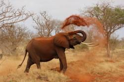Kenia Land der roten Elefanten