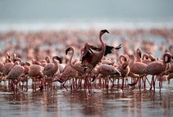 flamingos_smaller.jpg