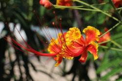 flower-1582166_1920.jpg