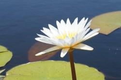 flower-290424_1920.jpg