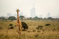 hallo Kenia