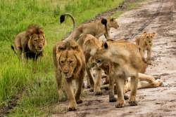 katavi-safari-tansania_tag 2