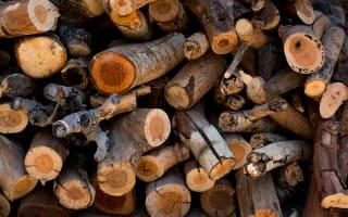 ערימת גזעים כרותים - המדריך לכריתת עצים