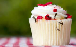 נמלים על עוגה לפני הדברה