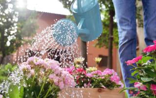 השקיית גינה במשפך | מחשב השקיה - מדריך מידרג