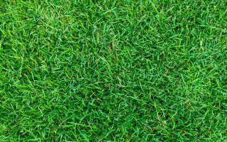 דשא טבעי מומלץ
