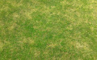 איזה דשא טבעי מומלץ?