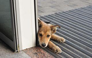 כלב מחכה מחוץ לבית אחרי הדברה