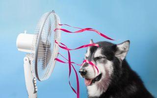 תקלות נפוצות במזגנים | גם לכלב חם בלי מזגן