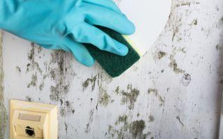 טיפול בעובש בקיר