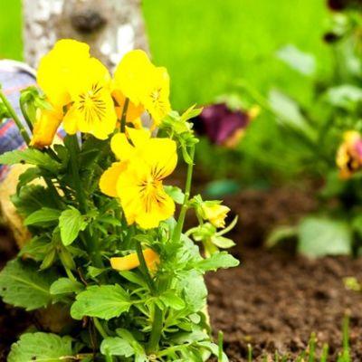 הכל לגינה