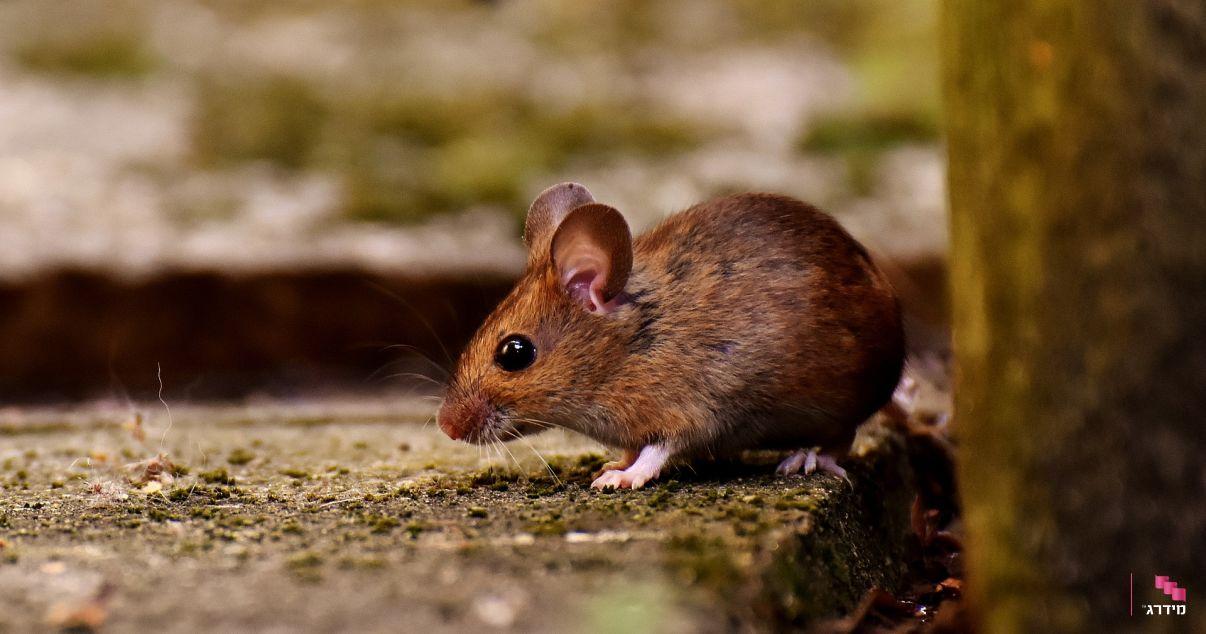 מלכודת לעכברים