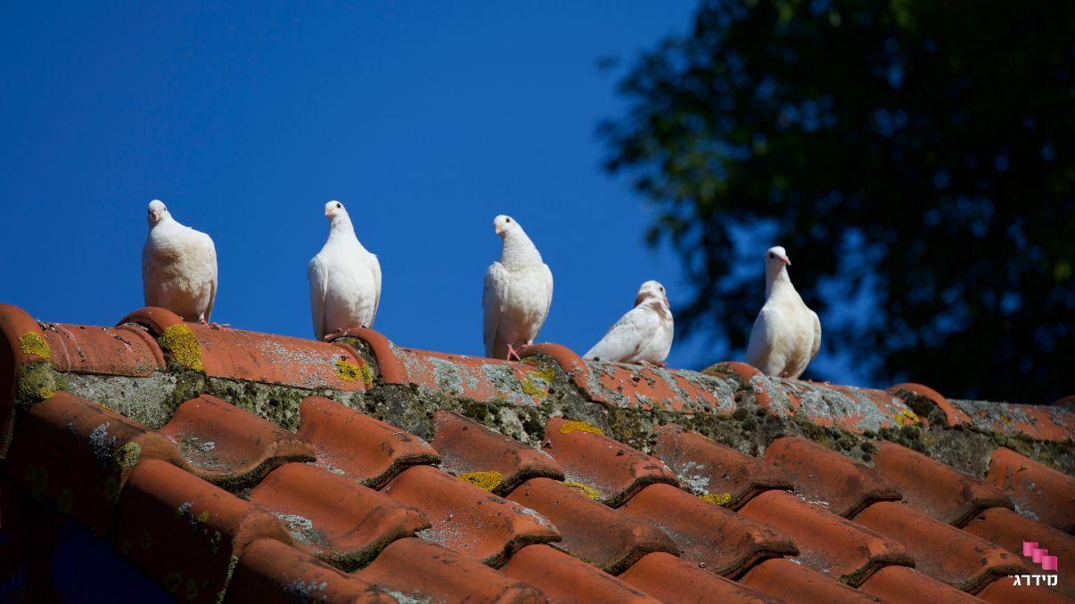 תיקון גגות רעפים   לכלוך שמצטבר על הגג