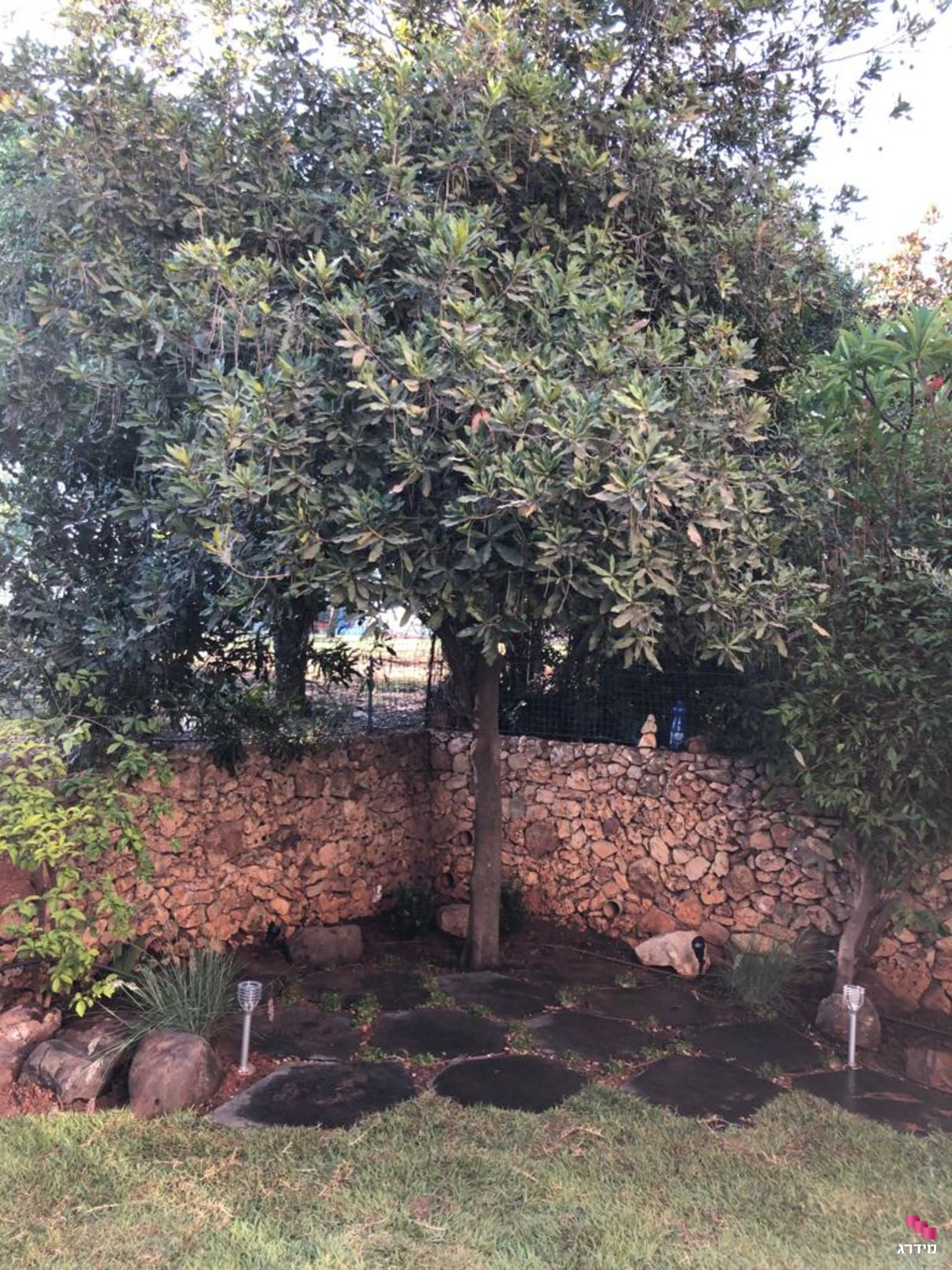עץ בגינה | מחירים של מערכות השקיה - מידרג