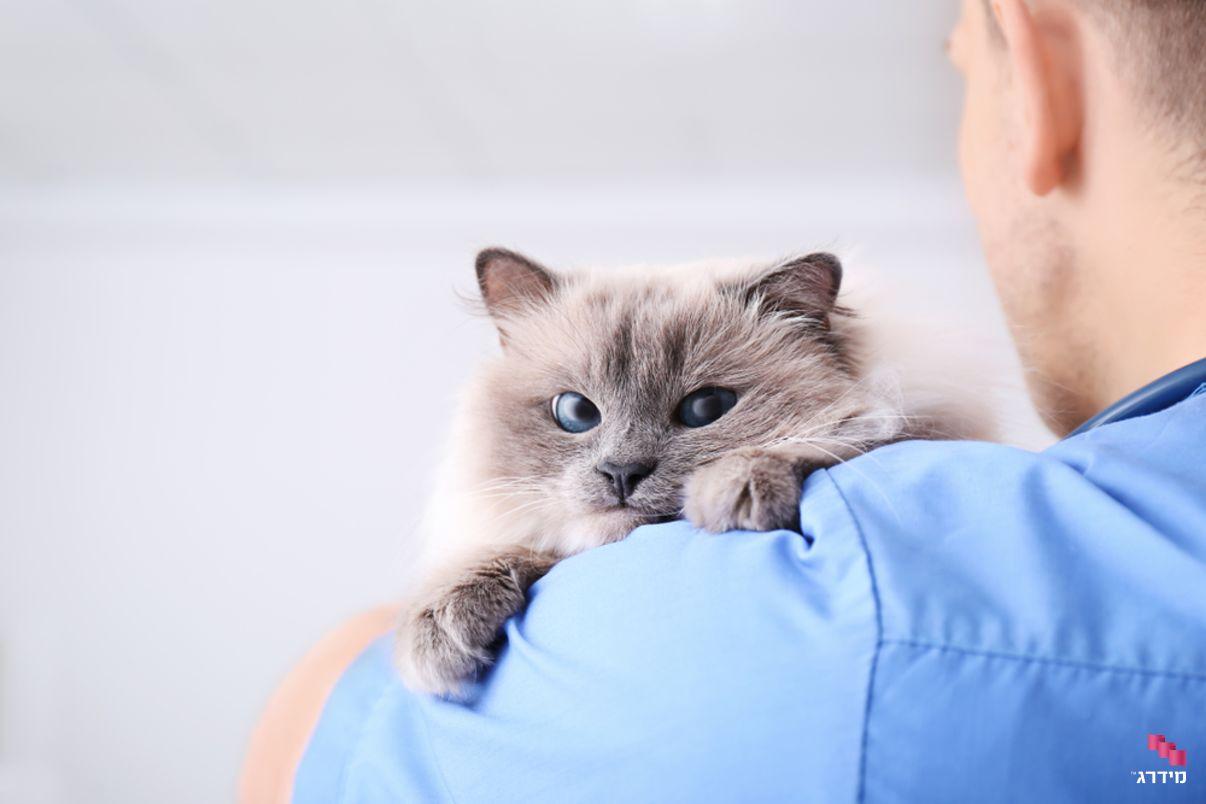 וטרינרים מומלצים | חתול
