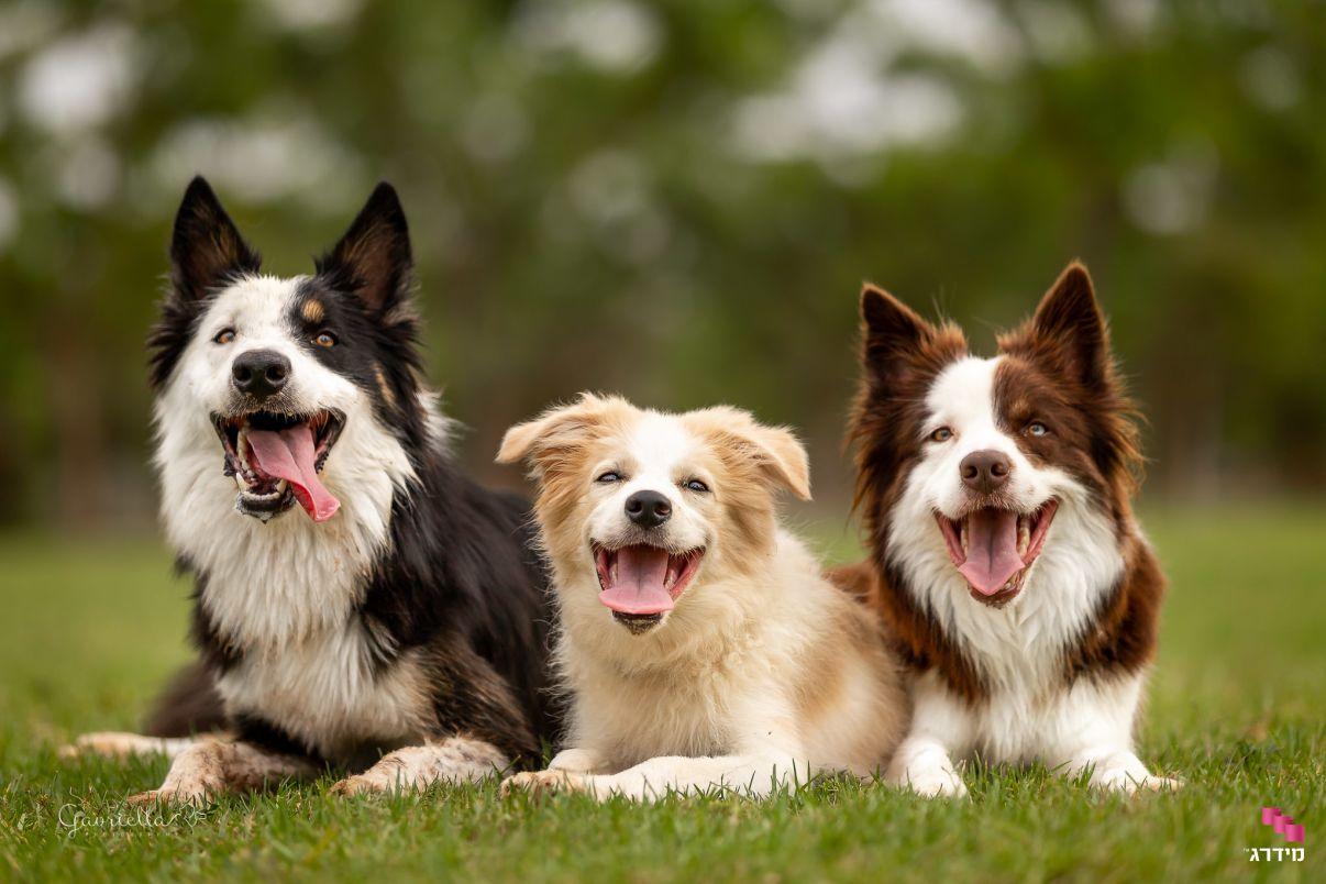 אילוף כלבים | כלבים בחוץ