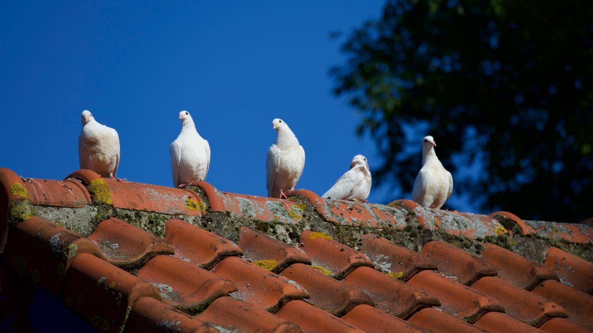 תיקון גגות רעפים | לכלוך שמצטבר על הגג