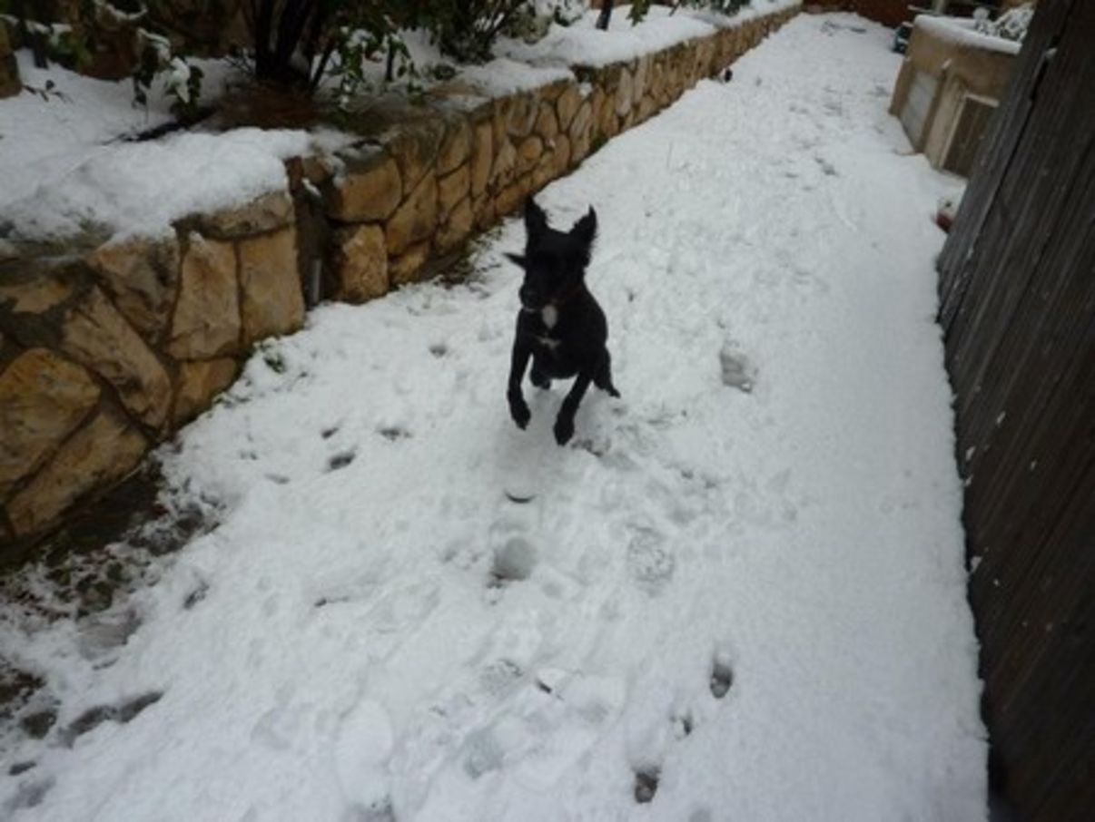 חיות מחמד בשלג