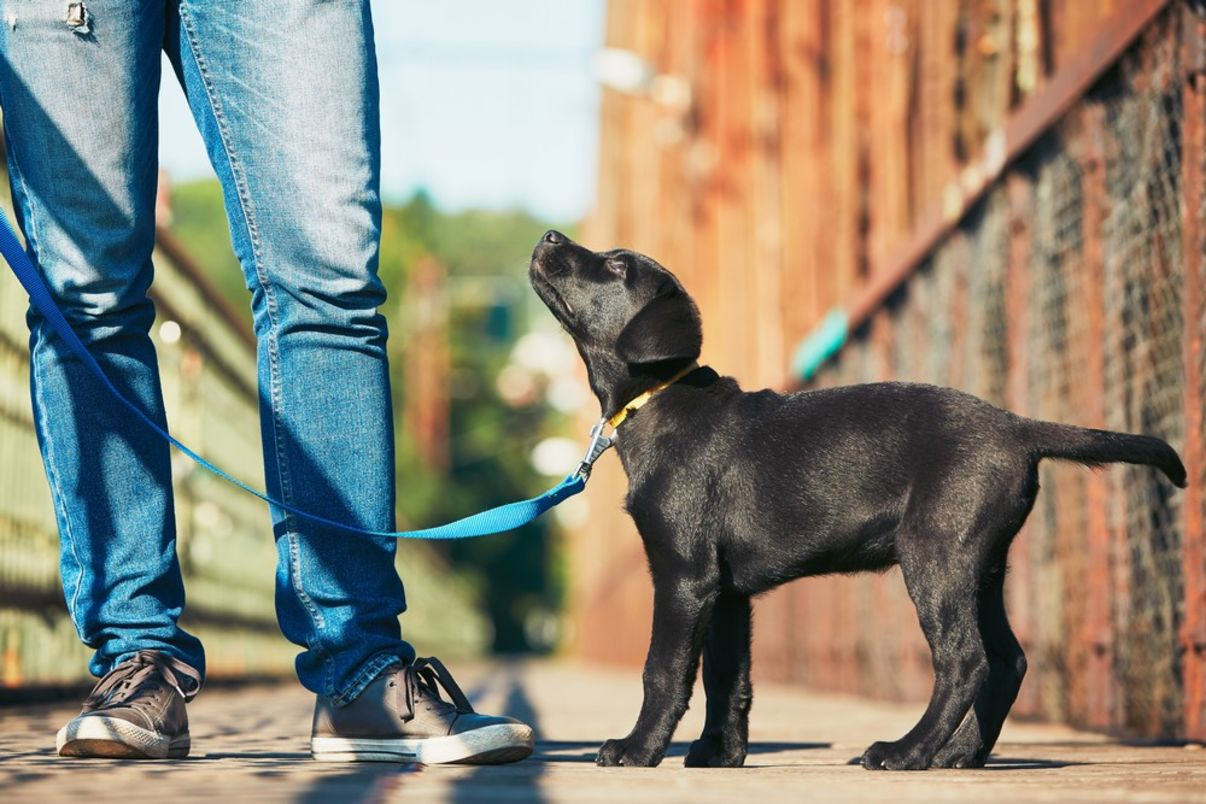 מאלף כלבים מומלץ | גור כלבים