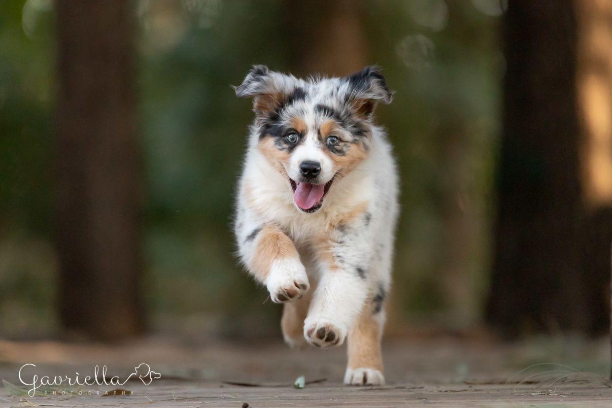 אילוף כלבים | כלב קופץ