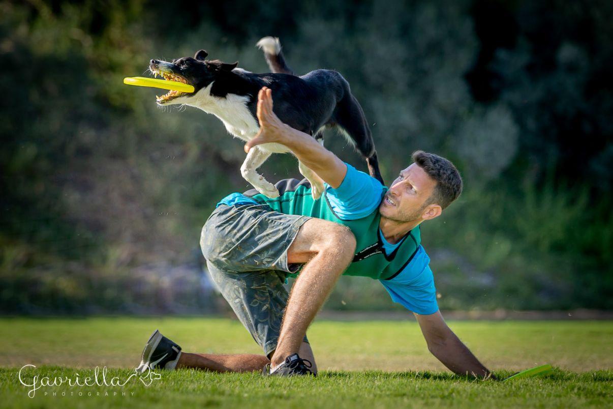 מאלף כלבים מומלץ | כלב קופץ