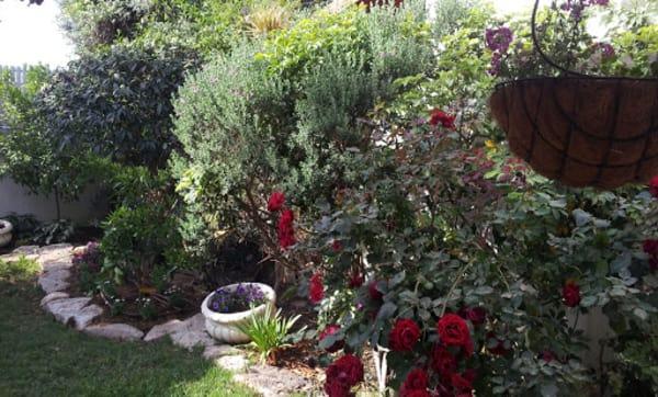 שדרוג הגינה - מבט מהצד השני