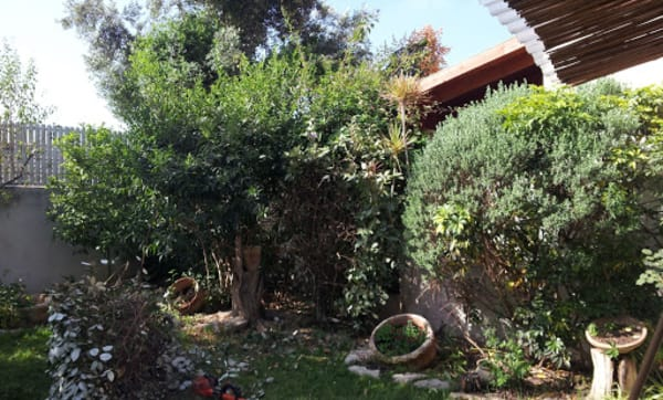 שדרוג הגינה. שתילים, שיחים, מערכות דישון והשקיה