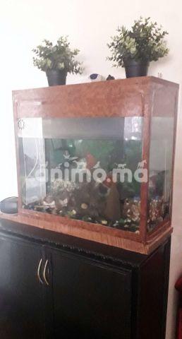 Animo - حوض سمك