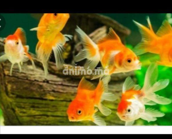 Animo - أسماك الزينة