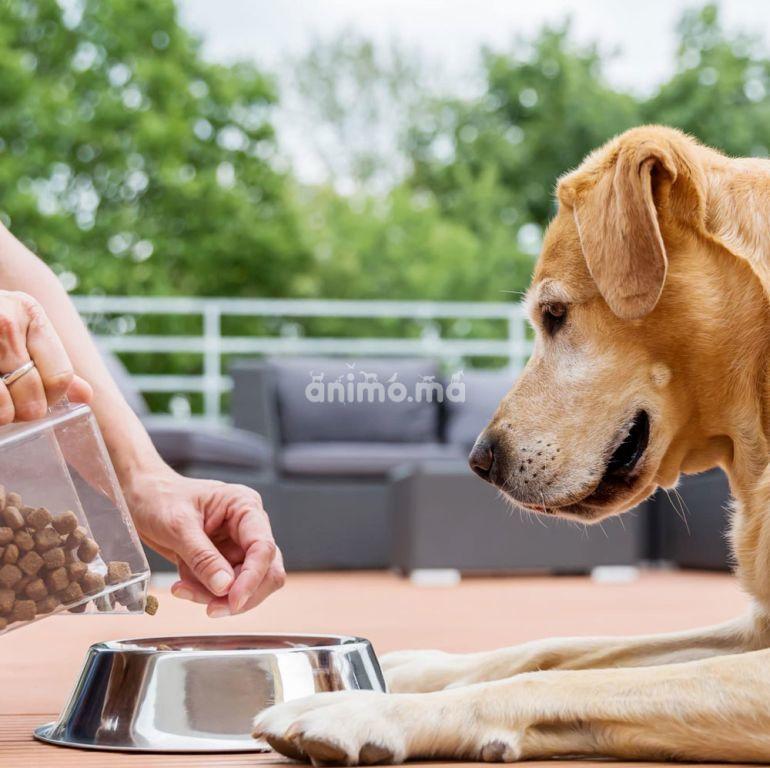 Animo - Nourrir son chien