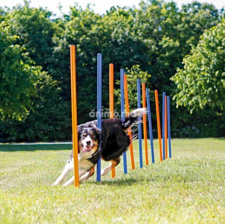 Animo - Principes généraux de l'entrainement d'un chien