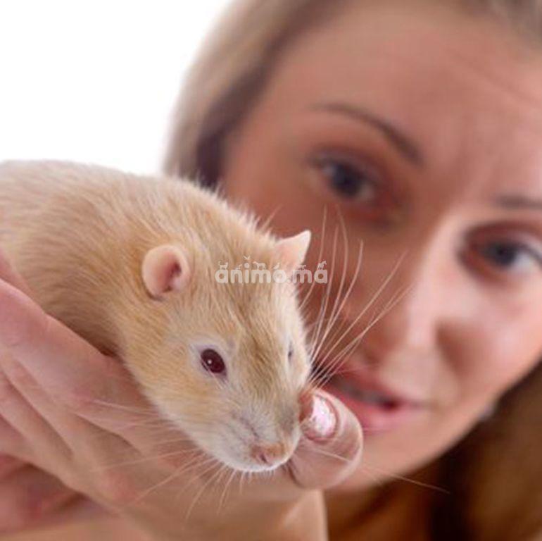 Animo - Les soins de base pour les rongeurs domestiques