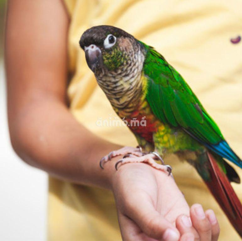 Animo - Êtes-vous prêt pour un oiseau de compagnie?