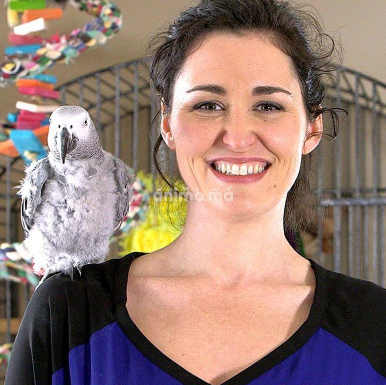 Animo - Dressage des oiseaux