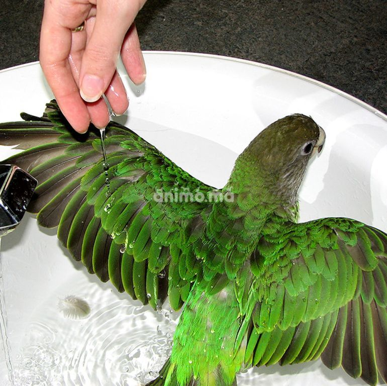 Animo - Toilettage et nettoyage des oiseaux
