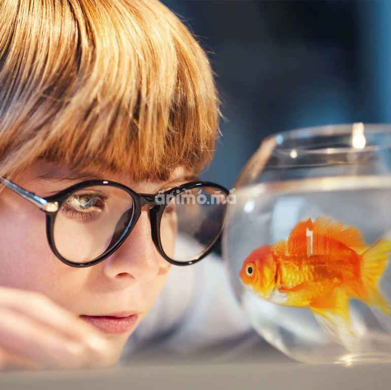 Animo - Adopter un poisson
