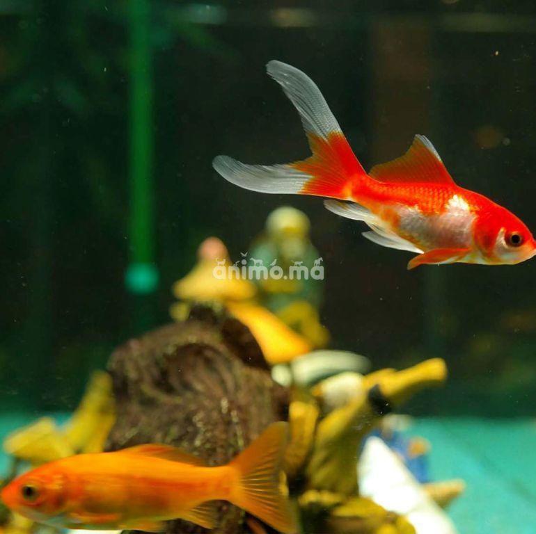 Animo - À quelle fréquence devriez-vous nourrir vos poissons?