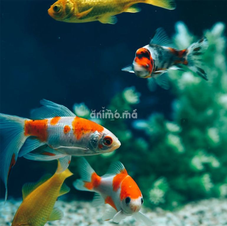 Animo - Quelques raisons pour garder un poisson